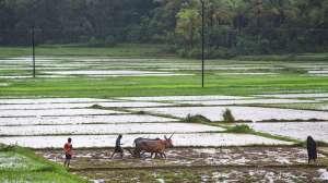 किसानों का जिक्र करते हुए राहुल गांधी ने बोला पीएम मोदी पर हमला, कह दी बड़ी बात 2