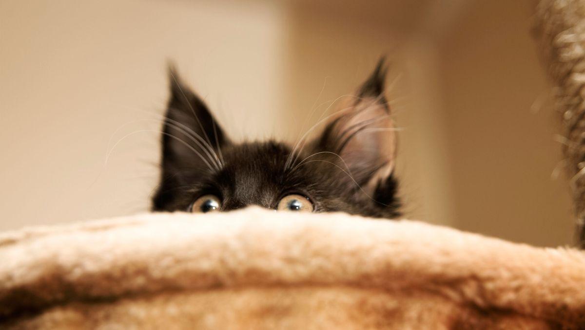 https www doctissimo fr animaux chat education chat gerer la peur du chat