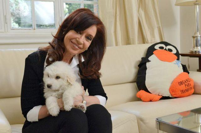 Cristina Kirchner en noviembre de 2013, un mes y medio después de la operación del hematoma subdural.