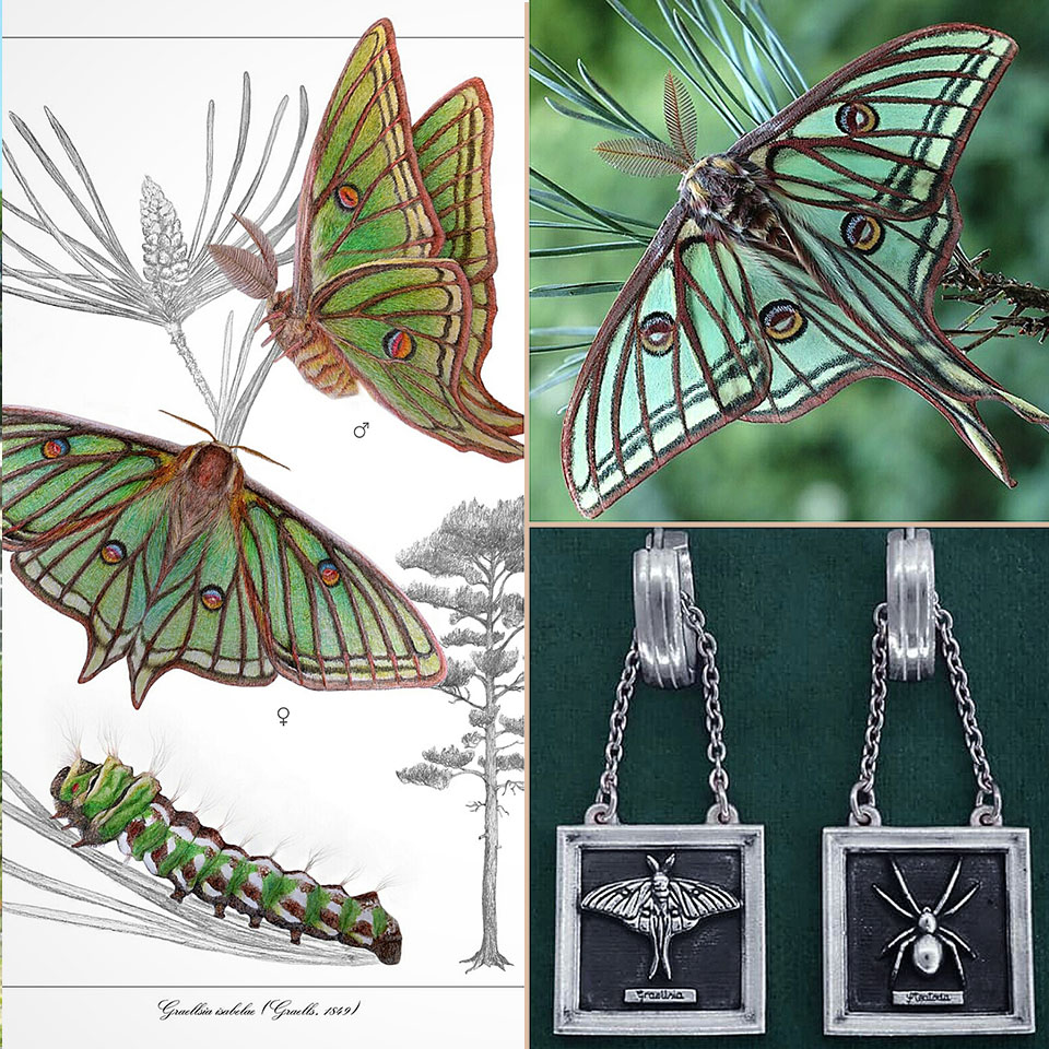 Atmosphere of the earrings d'earrings Isabelle moth or stained glass entomology way