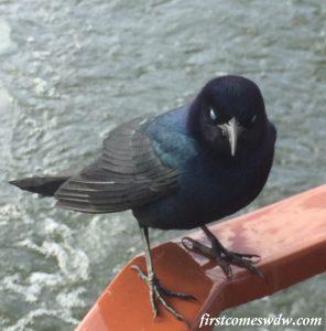 baylakeboatbird
