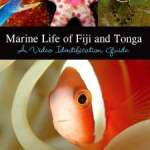 Marine Life of Fiji and Tonga: A Video Identification Guide