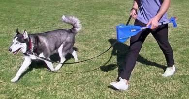 Dog-Bag-It Pooper Scooper
