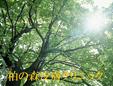 柏の森皮膚クリニック