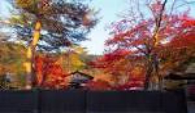 Tohoku koyo photo04