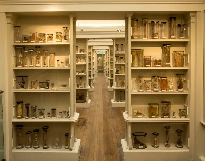 Image result for edinburgh pathology museum