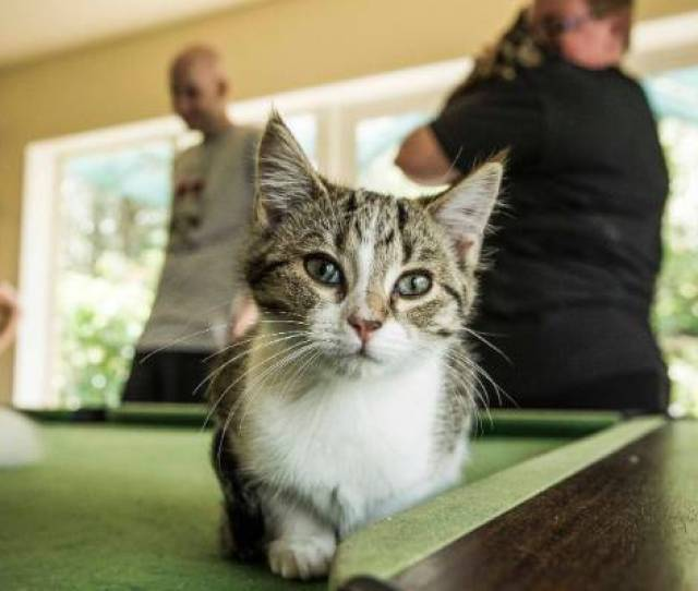 From Rescue Cats To Pampered Stars 40 Cat Cuddlers To Acclimatise Cat Cafe Felines
