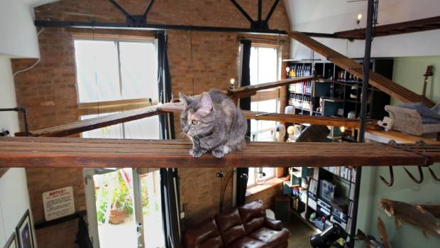 Try These Catification Design Tricks To Help Your Cat