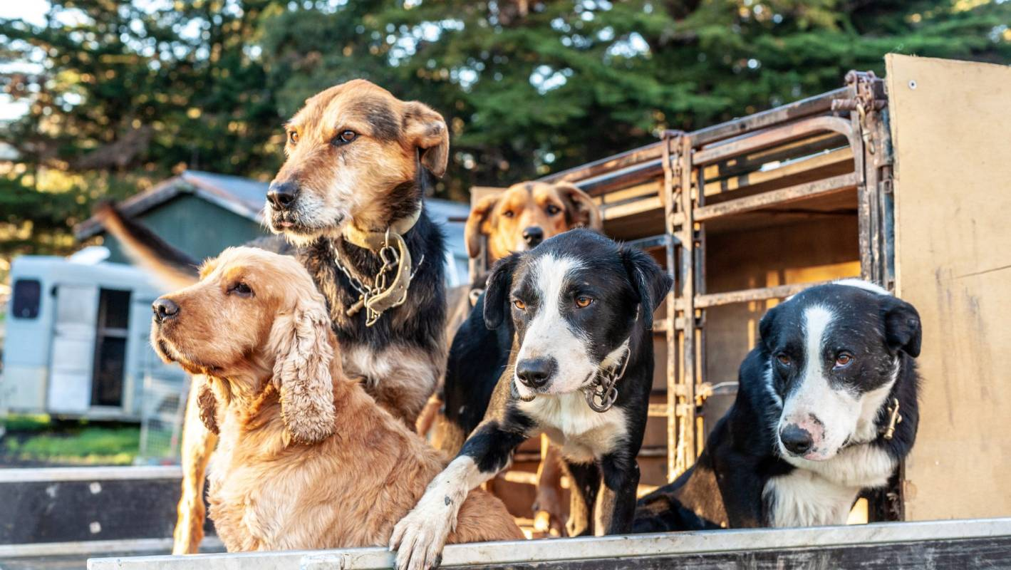Farmers Told Dogs Need More Comfortable Kennels