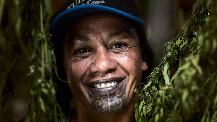 Lisa Beach holds a harvested cannabis plant at a ground breaking scheme near Ruatoria on the east coast of the North Island being legally grown for scientific testing.