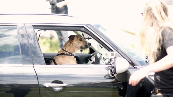 Rescued stray dogs in New Zealand learn to drive