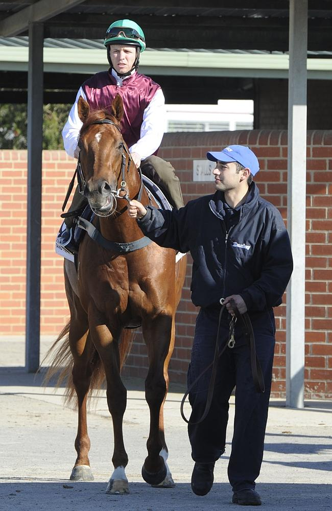 Sepoy takes part in trials at the Cranbourne Training Complex.