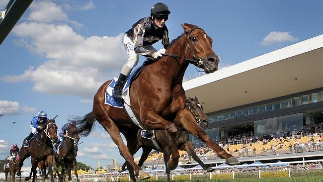 Srikandi has drawn ideally in gate five for the Doomben 10,000 on Saturday. Picture: Jono