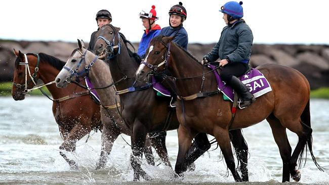 Sarah Lynam rides Fiorente (second from right) during a morning swim at the beach. Picture: Wayne Ludbey