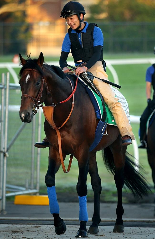Japan's Real Impact walks back to his stall after a workout. Picture: Gregg Porteous