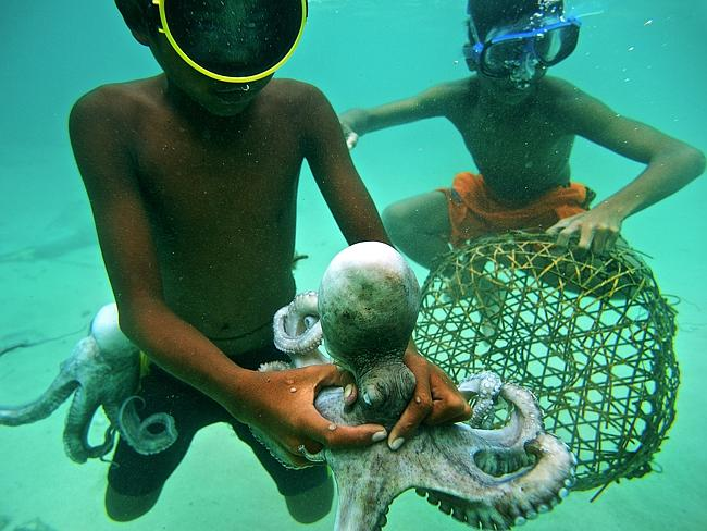 The Bajau children are no strangers to working, with these two young boys catching an oct
