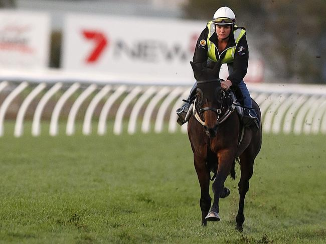 Winx (pictured) will certainly provide ample opposition for Tony Noonan and his promising