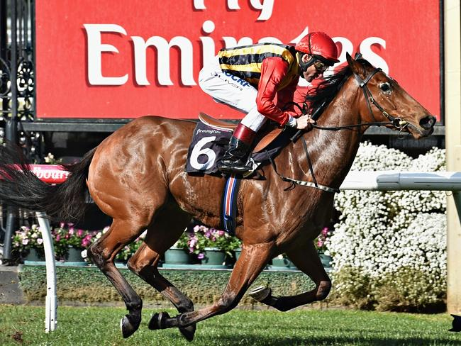 Damien Oliver boots home Jalan Jalan, the first of a winning treble. Picture: Getty Image