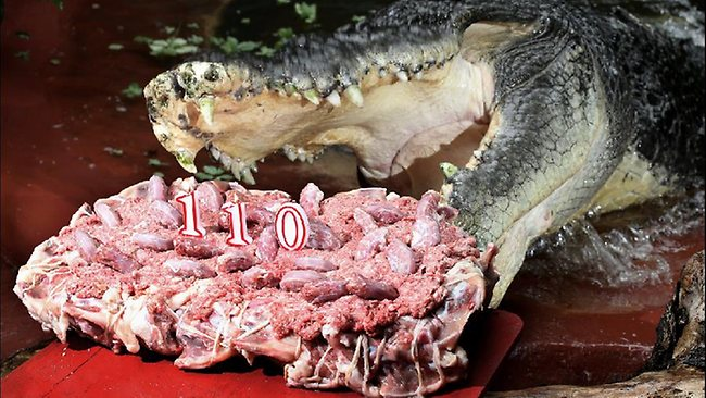 Cassius the Croc  110 birthday