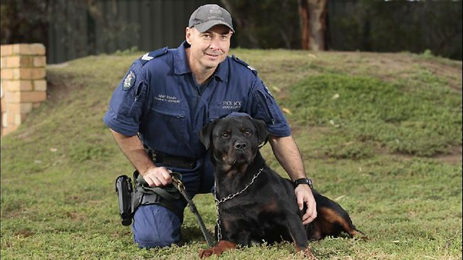 Nat the Critical Incident Police Dog