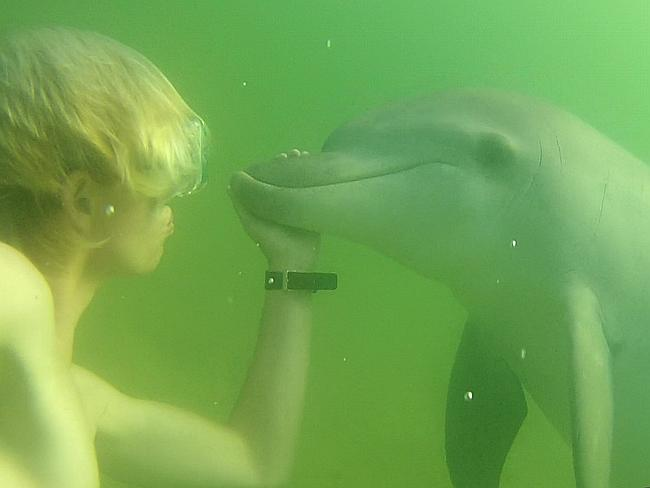 Alex Hayes playing with a dolphin at Clontarf Picture: Supplied