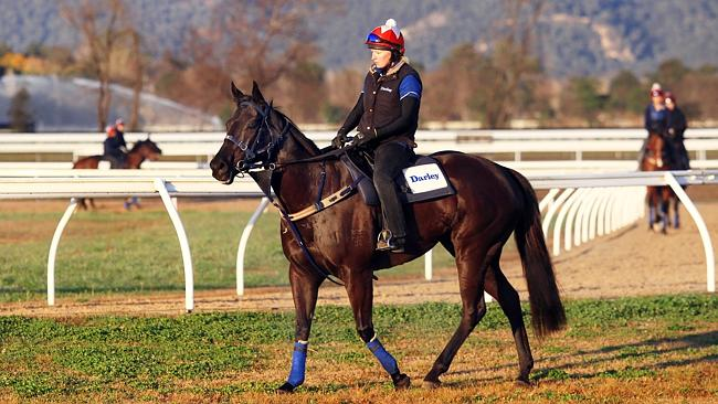 Knoydart will fly the flag for Godolphin in the Group 1 The Galaxy.