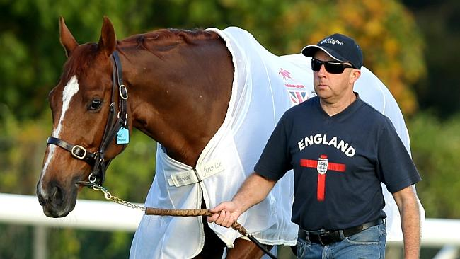 Red Cadeaux could start in the Queen Elizabeth Stakes on Saturday. Picture: Gregg Porteou