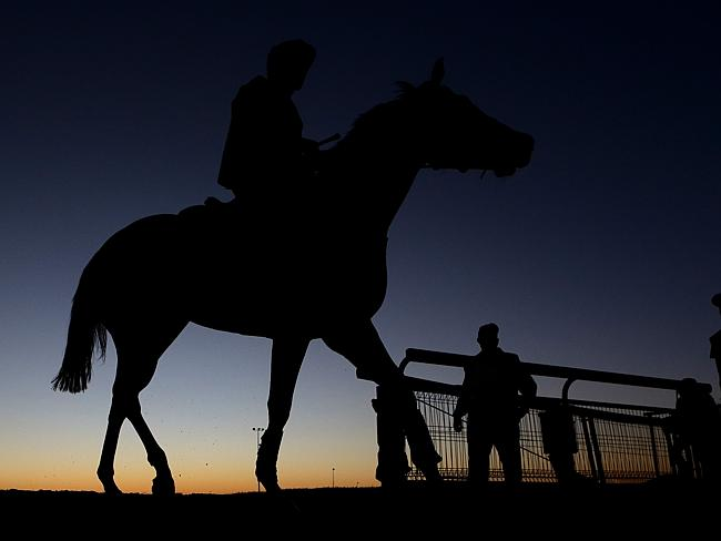 Srikandi finishes a trackwork session in Brisbane. Picture: Darren England