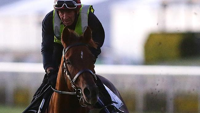 Fidgety starter: Doomben 10,000 equal favourite Srikandi carves up the turf during a work