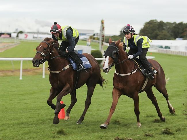 Srikandi (left) works before her disappointing performance in the Doomben 10,000. Picture