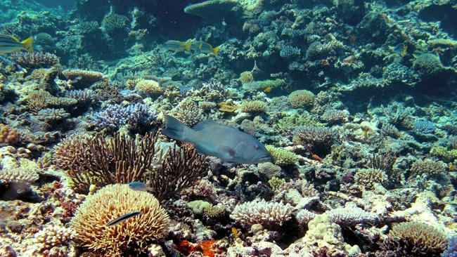 Last week's UNESCO report accepted that enough has been done by Australia to stop the des