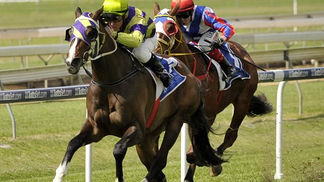 Rosehill Guineas placegetter Teronado has made it through his first real serious test. Pi