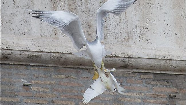 Odd Symbolism Pope Offers Peace Doves Which Are Attacked By Crows