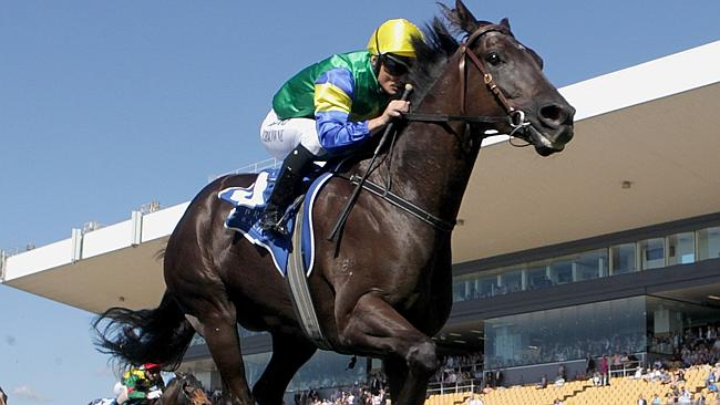 Cape Kidnappers is back from injury and set to headline the George Moore Stakes. Pic: Jon