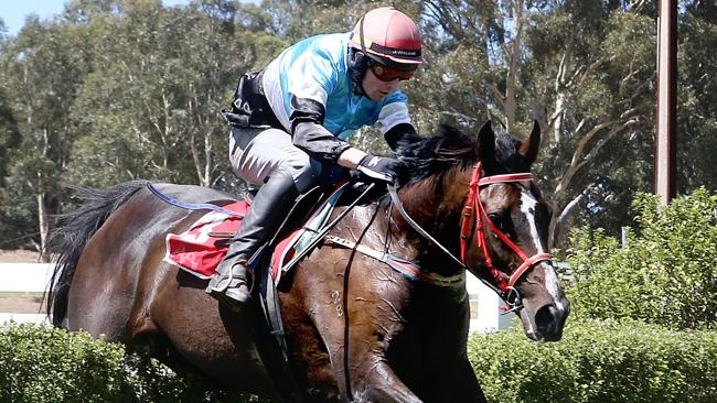 Nishiazabu (Niki O'Shea) during a steeple trial at Oakbank. Picture: Calum Robertson