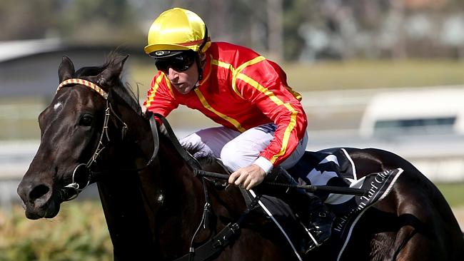 Aussies Love Sport has joined Toby Edmonds' Gold Coast stable. Picture: Damian Shaw