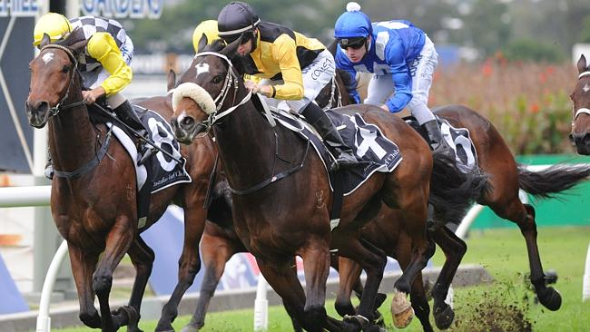 You'll Never (nose roll) is expected to make his presence felt at this weekend's horse's