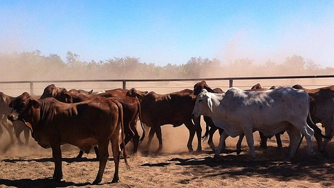 Graziers in Queensland have welcomed a deal with China but animal rights groups are outra