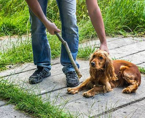 How To Discipline A Dog Without Beating