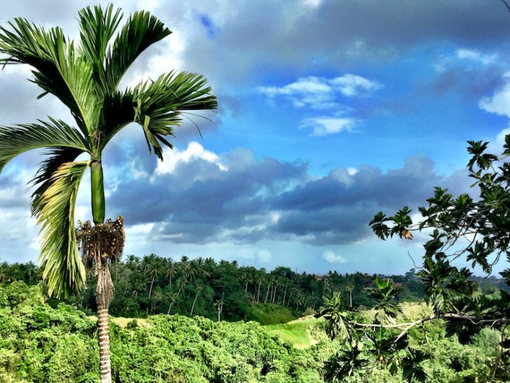 The view from Cafe Indus, where Chris and I go fro a dance in Ubud, Bali. Please come and join us!