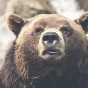 A cute bear