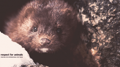 US mink farming drops to record low