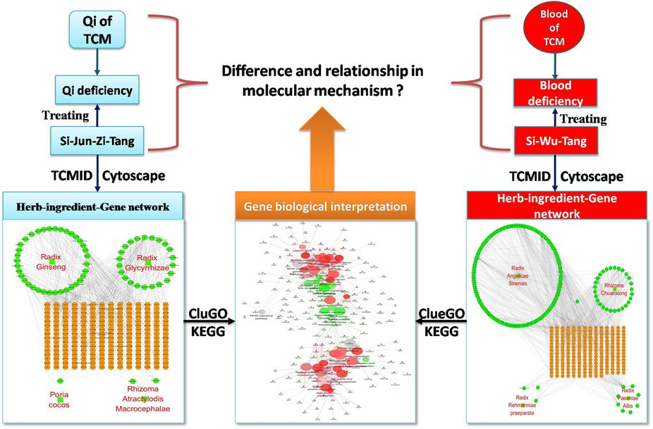 CAM systems biology