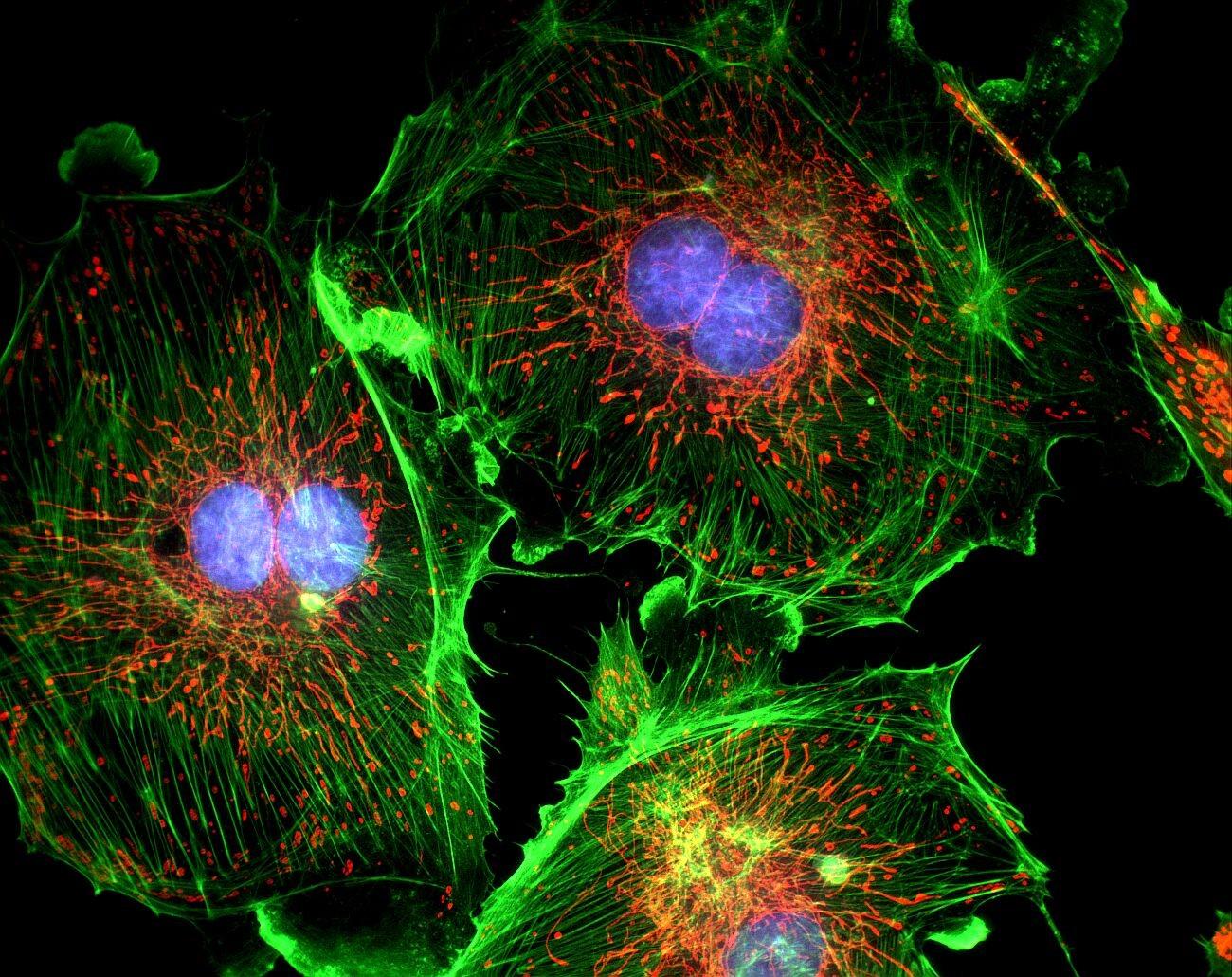 Fluorescence Microsocopy.