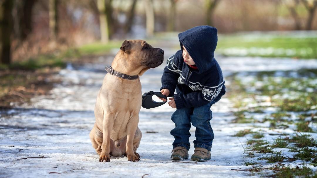 Børn må ikke genere en hund