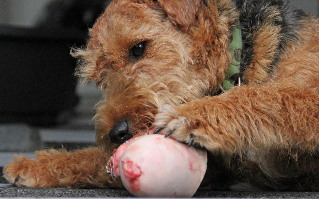 Marvben renser din hunds tænder