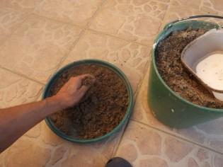 Desfazer os medronhos no areão.