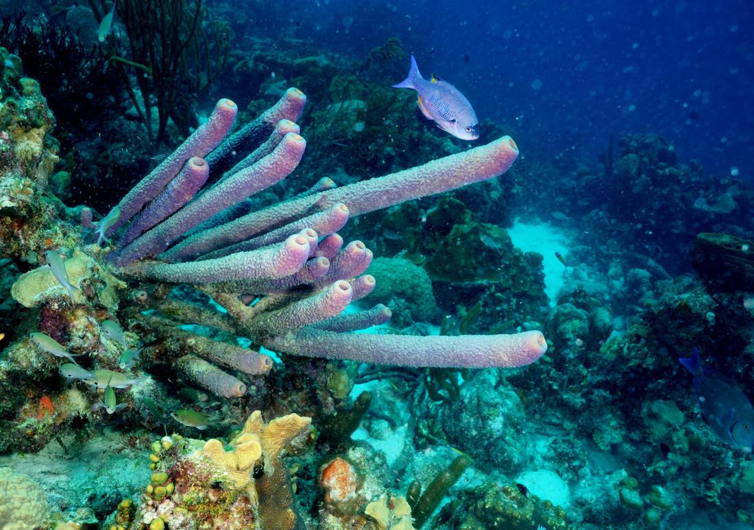 Stove Pipe Sponge
