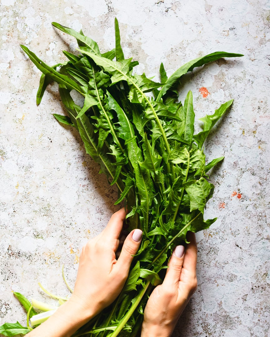 hands holding a bunch of dandelion greens