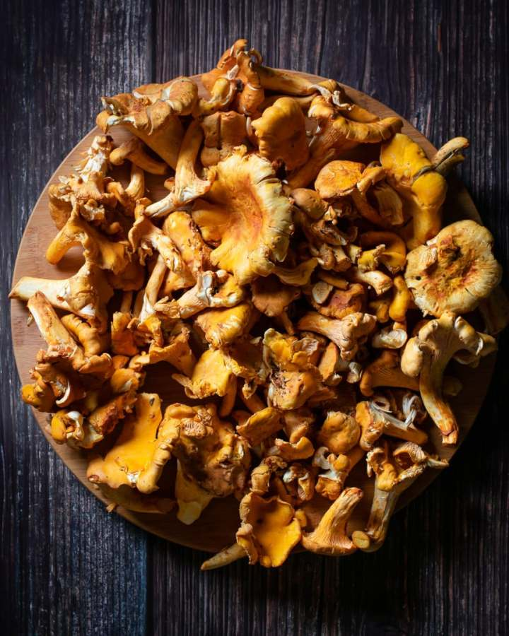 chanterelle mushrooms on round wooden plate on dark background